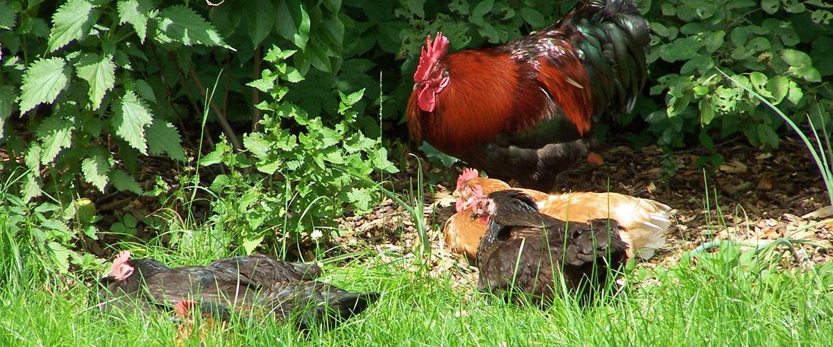Tiere Kreger's Hof - Urlaub auf dem Bauernhof